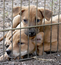 Urge the United Nations to adopt a Universal Declaration on Animal Welfare.