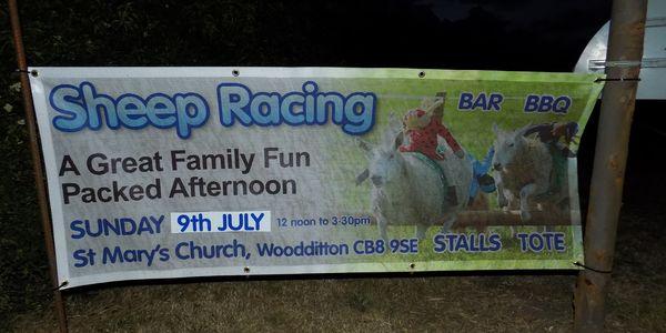 Sheep racing poster