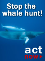 protect the whale sign the petition