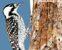 http://dingo.care2.com/c2p/care2/woodpecker2_200px.jpg