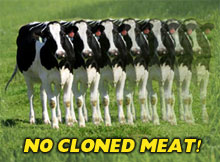 Just say no to milk and meat from clones!