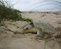 Report wildlife casualties from the Gulf oil spill and clean up.