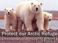 Click here to help save the polar bears!