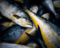 Stop Overfishing, Find Ecological Balance