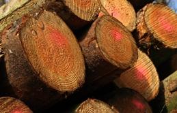 Stop Logging!