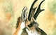 Pronghorn Antelope (USA) by Lezle Williams