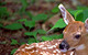 Whitetail Fawn by John Wasserman