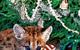 Cougar Cub under the tree by John Wasserman