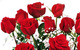One dozen Red roses by ProFlowers
