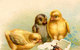 Baby Chicks by A. Vasiliev <br>G. Minkova
