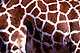 Giraffe Skin Jigsaw Puzzle by Care2.com