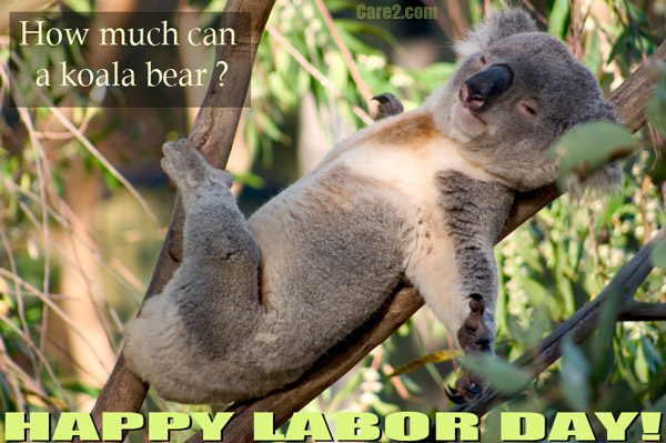 Koala Bear Care2 Ecards Free Online Animated Greeting Cards