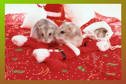 Christmas Mice - Care2 eCards, Free Online Animated Greeting Cards