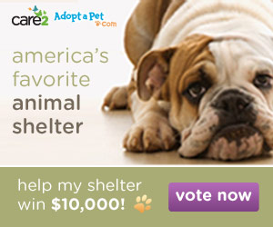 America's Favorite Animal Shelter Contest - help WAG Animal Rescue win $10,000 - vote today!