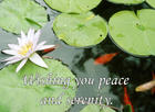 Water Lilies . . . Peace and Serenity