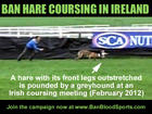Ban coursing in Ireland
