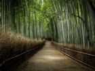 big bamboo forrest.png