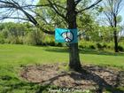 Peace sign flag tree MFP French Park 8 Apr 2012 comp url.JPG