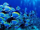 marine-wildlife-animals-613-2.jpg
