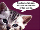 cat_quotes.png