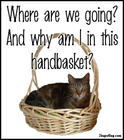 why_am_i_in_this_handbasket_cat_001.jpg