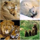 Lions And Tigers And Bears.jpg