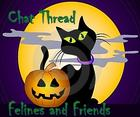 black-cat-halloween-chat.jpg