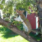 Released Squirrel Having Fun