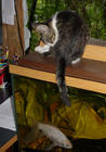 Houdini on the studio fishtank 4care2.jpg