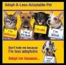 Adopt a pet from your local shelter
