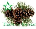 pine cones green star