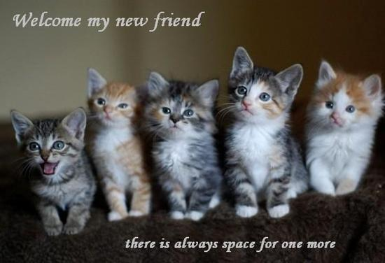 Welcome_kitties