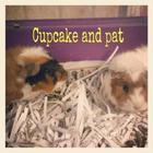 Cupcake and Pat I adoted them from hillside spca:) 2-10-13
