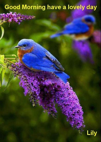 Blue bird edited.jpg