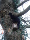 checking nestboxes