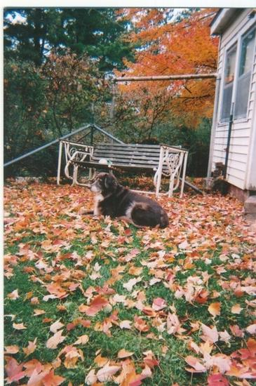 Dottie in the Fall