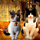 Egyptian Cat Fantasy