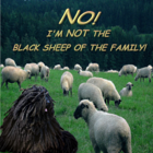 NO! I'm NOT the Black Sheep of the Family!