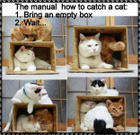 How to catch a cat2.jpg