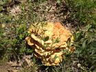 Now that's a Fungus