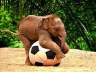Baby Elephant with Huge Volleyball.jpg