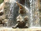 Elephant in Waterfall.jpg