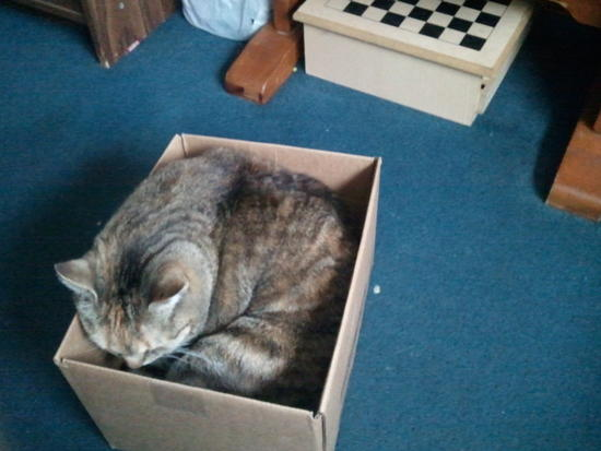 Savanna in a Box