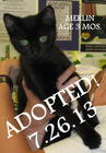 Merlin ADOPTED 7/26/13