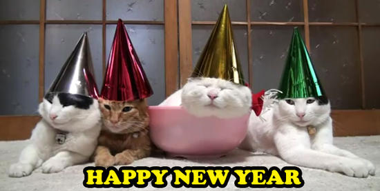 HAPPY-NEW-YEAR-CATS-1325605298.jpg