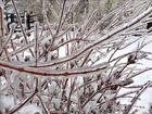More Ice on branches