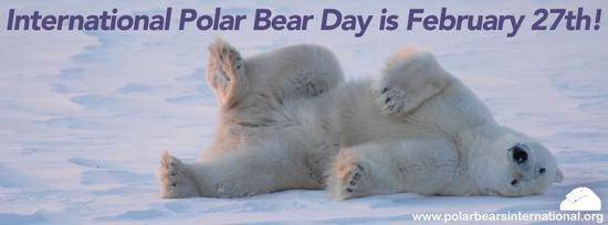 polar bear feb 27