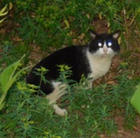Indiana's Feral Cat Father