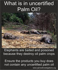 Elephants are baited and poisoned because they destroy oil palm crops...