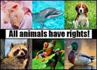 Animal-Rights-animal-rights-13295974-600-431.jpg